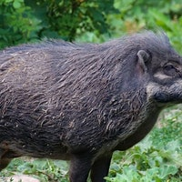 Inverse Daily: The Internet Is Going Wild Over 30-50 Feral Hogs