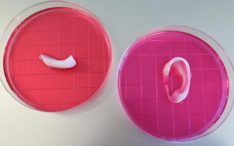 3d printing gel petri dish ear cartilage