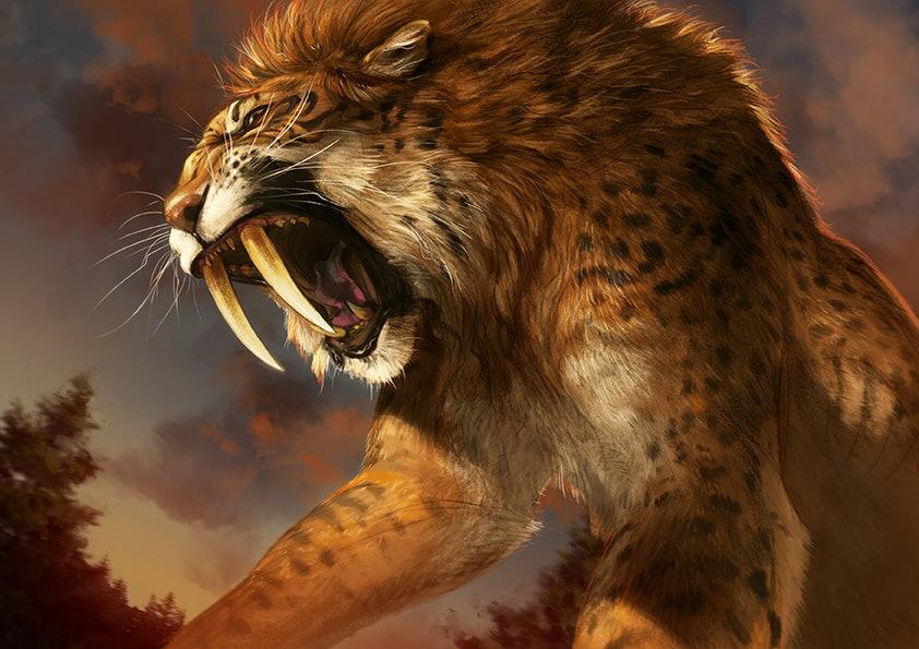 saber-tooth cat