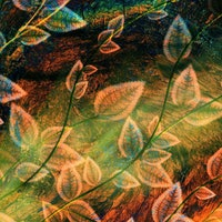Scientists: Cyanobacteria is the Real MVP of Modern Life