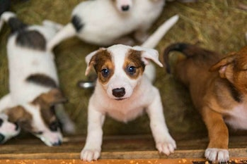 Puppy Shelter