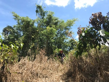 The author on the former site of the Brooke cottage. Locals sprayed the area with weed-killer to reclaim the clearing from the jungle.