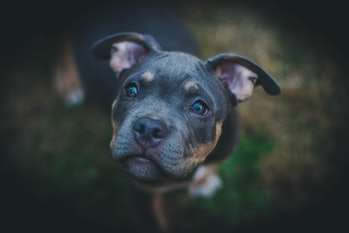 dog, puppy, emotion