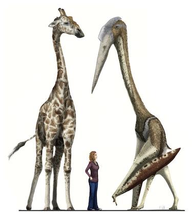 azhdarchid giant pterosaur flight weight height