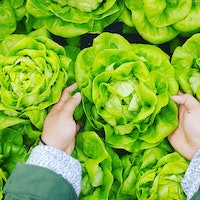 'Fully Automated Luxury Communism' Author Has a Big Problem With Lettuce
