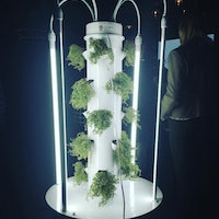 Aeroponics: Why Vertical Towers are the Waterless Future of Urban Farming