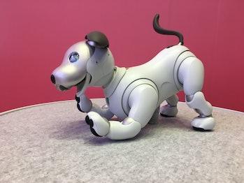 sony robot dog aibo