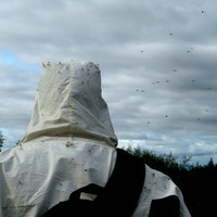'Killer' MosquitoMate Swarms Approved for Release in U.S. by EPA