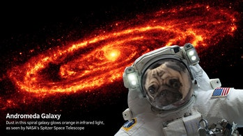 Clyde, the author's dog, observes the Andromeda Galaxy.