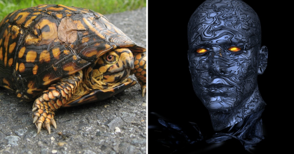 Human Scientists Can Control Cyborg Turtles With Their Minds