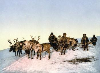 reindeer sled Russia