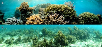 Corals in an MPA (a) were thriving, while corals outside of an MPA (b) were covered in algae.