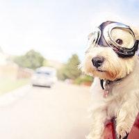 Embark Dog DNA Test Kit