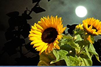 The Flower Moon used to inspire more than just flowers.