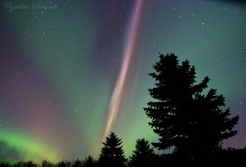 Steve the aurora