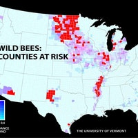 These Maps Show How Bad It's Become for U.S. Bees