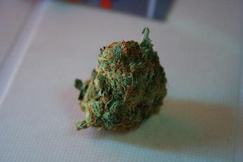 unknown strain