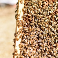 Scientists Are Surprised That Bees Can Learn, Remember, and Match Symbols