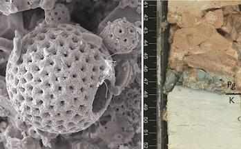 marine fossils