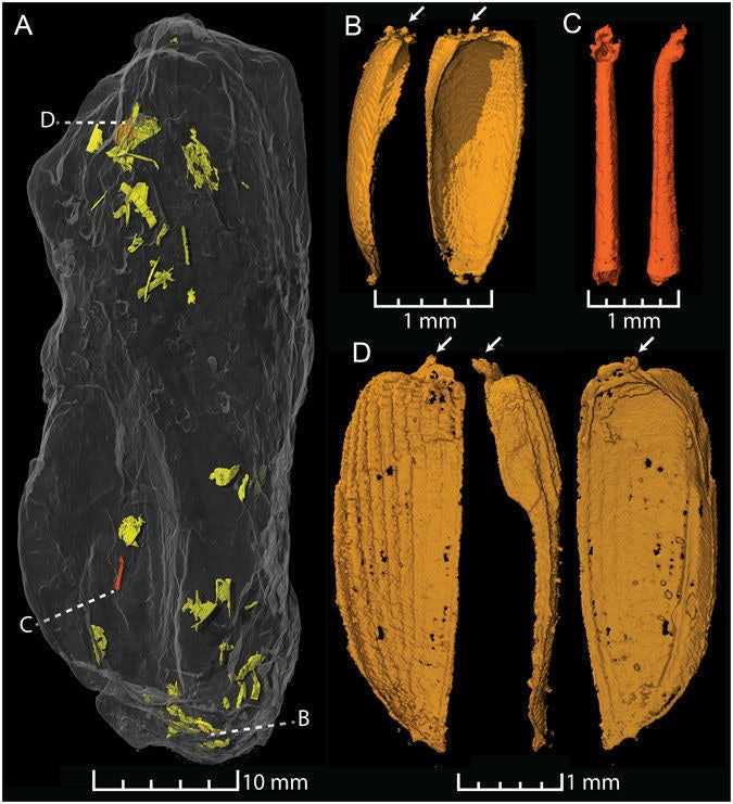 fossile coprolite poop triassic jurassic dinosaur fish beetle insect wings graph scan