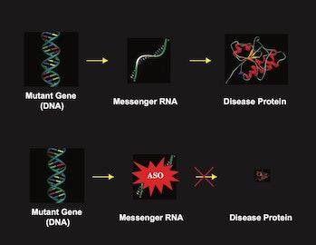 dna mutant diagram