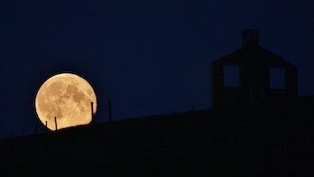 Harvest Moon IMG_2547