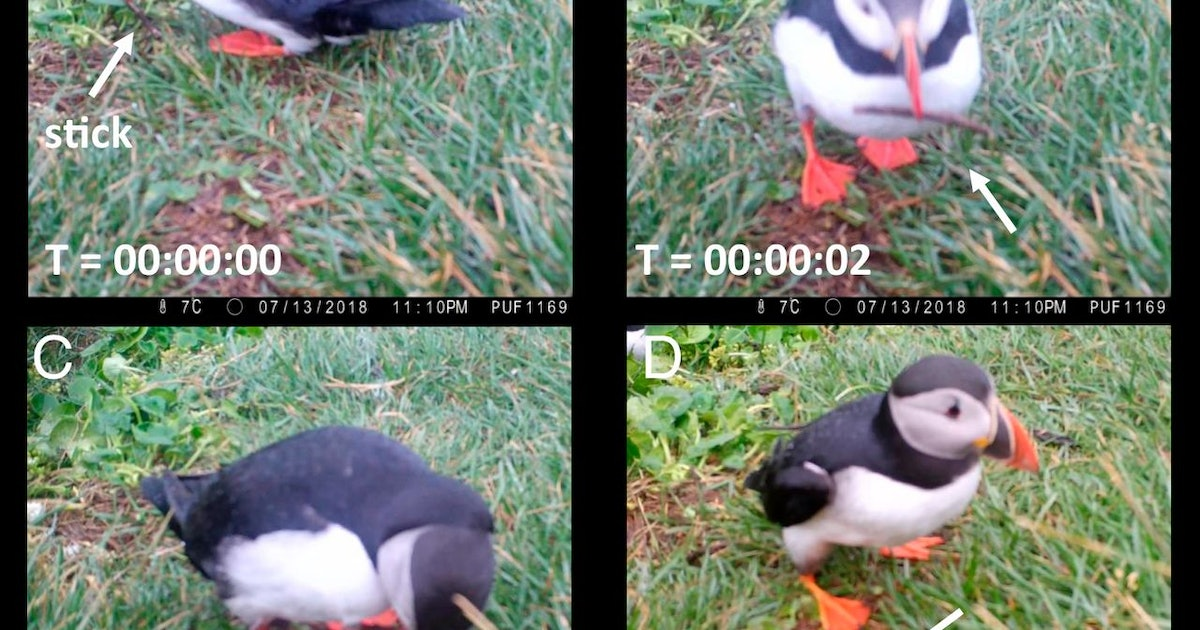 You can learn a lot from a back-scratching puffin -- study