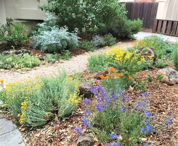 native plants, California