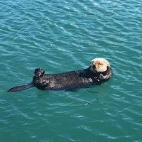 Toxoplasma:Creepy Disease in Outdoor Cats' Poop Is Killing Sea Otters