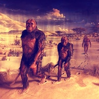 Walking Upright: Evolution of Bipedalism Linked to Supernova in New Theory