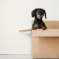 Foolproof Moving Tips to Land the Home of Your Dreams, From a Serial Mover