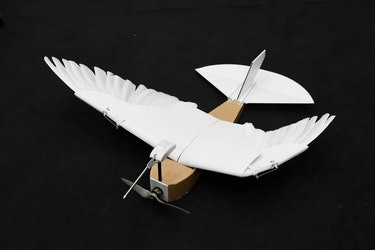 The PigeonBot prototype is equipped with 40 real pigeon feathers -- almost all from a single bird.