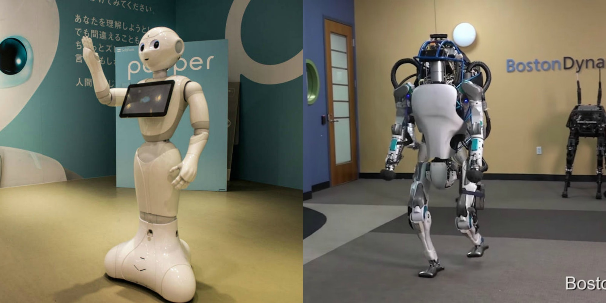 Pepper Atlas robots