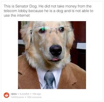 Senator Dog.