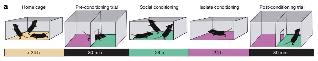 mice mdma conditioning