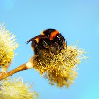 Neonicotinoids: A Pesticide's Major Effect on Bees Is Surprising Scientists