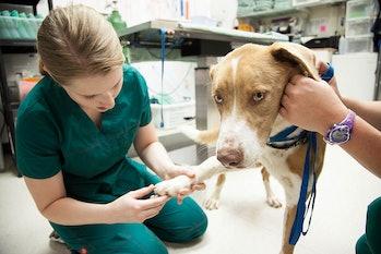 dog, veterinarian