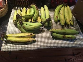 Gros Michel bananas.