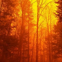 Why Are There Disastrous Wildfires in the Southeast?