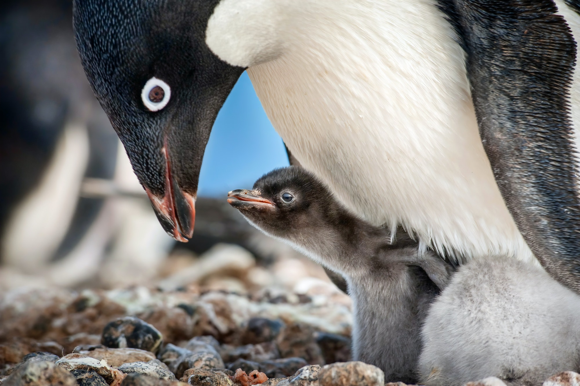 disneynature penguins review