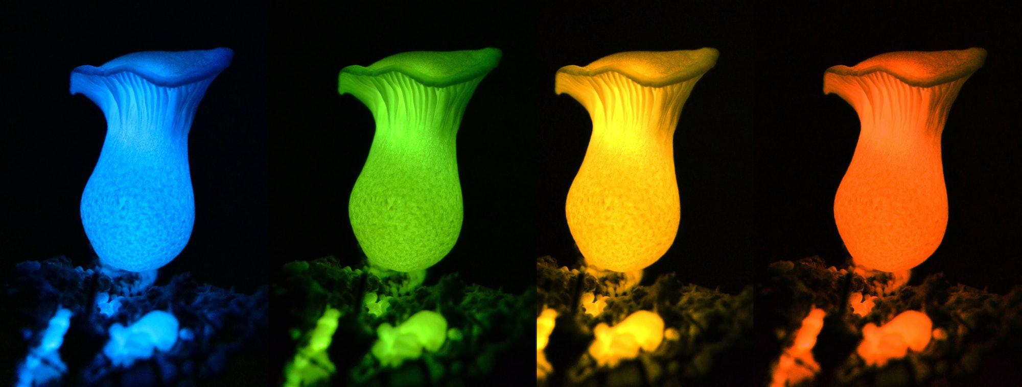 four colored mushrooms