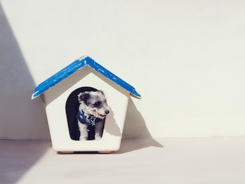 dog house canine small