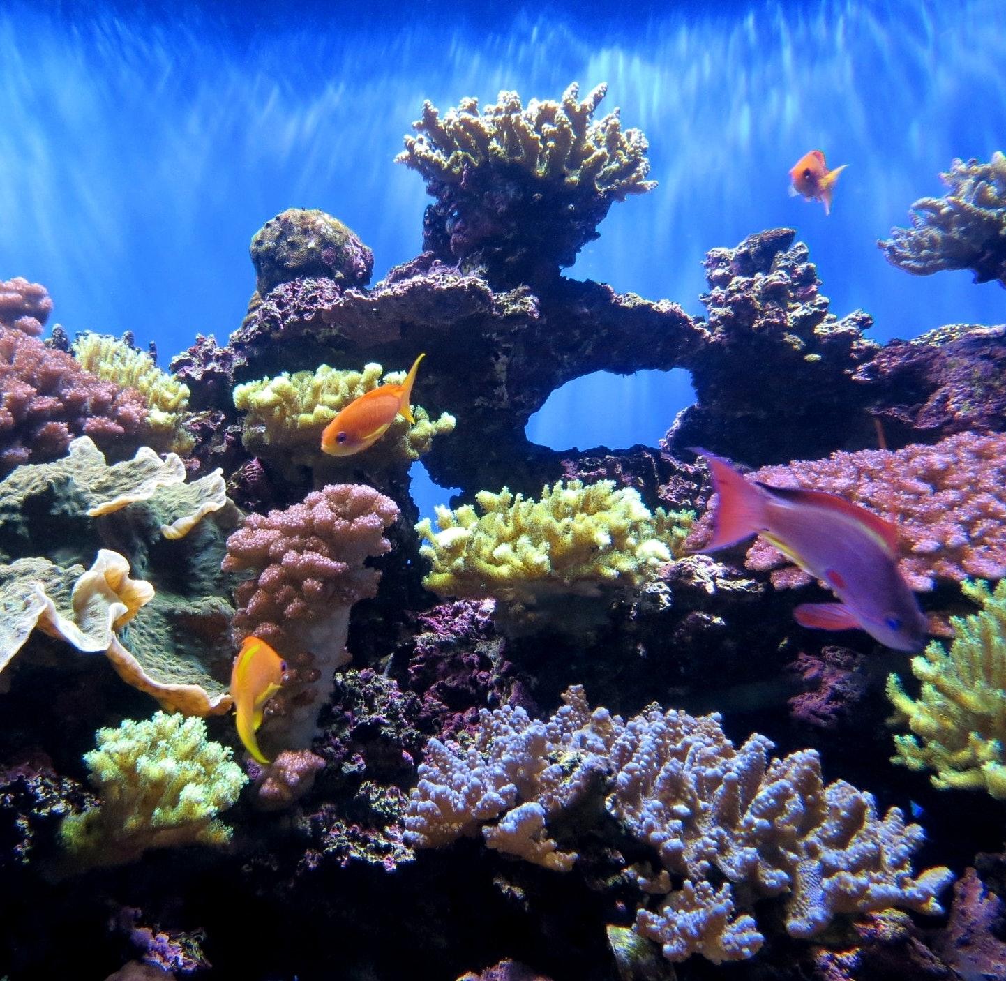 coral reef aquarium scrips birch aquarium fish fishes color