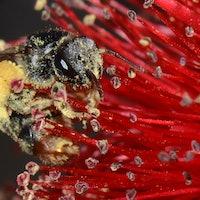Why Pollen Allergy Season Causes Vertigo, According to Science
