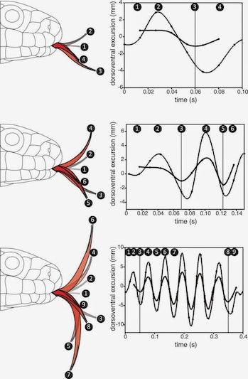 snake tongue diagram