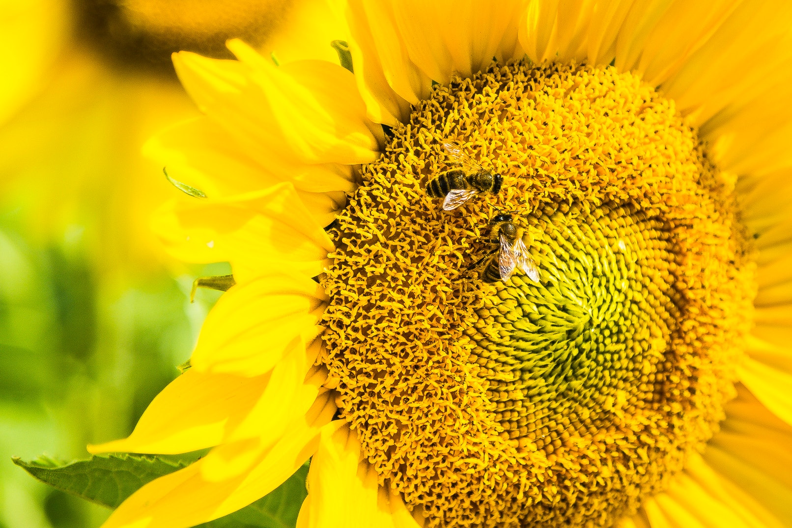 Scientists trained bees to do basic math, complicating what we know about brain size and brain power.