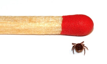 male tick and match