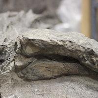 Alberta's Famous Nodosaur Finally Has a Name