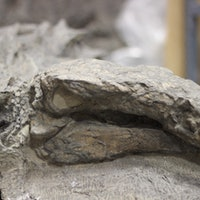Alberta's Famous Nodosaur Finally Has a Name