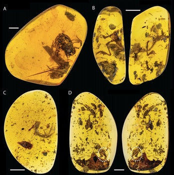 frogs preserved in amber